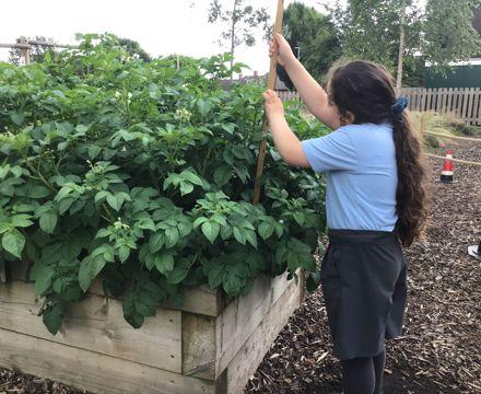 IMG 5878 I growing pots