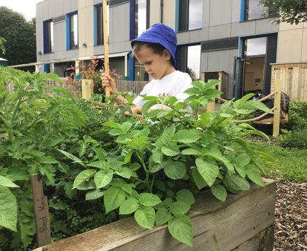 IMG 5881 FW growing pots